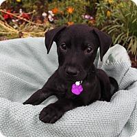 Adopt A Pet :: FORD - Newport Beach, CA