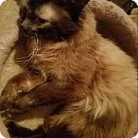Adopt A Pet :: Hershey - Ennis, TX