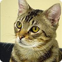 Adopt A Pet :: Harley - Sherwood, OR
