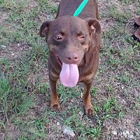 Adopt A Pet :: SPIDERMAN - Decatur, AL