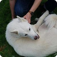 Adopt A Pet :: Tundra - Lakeport, CA