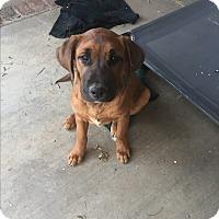 Adopt A Pet :: Flash - Studio City, CA