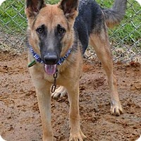 Adopt A Pet :: Layla - Beaumont, TX
