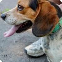 Adopt A Pet :: RUDY - Peru, IN
