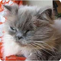 Adopt A Pet :: One Eyed Jack - Davis, CA