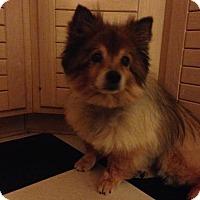 Adopt A Pet :: Naomi - Mount Gretna, PA