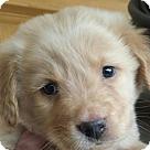Adopt A Pet :: Blitzen