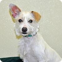 Adopt A Pet :: Mary Ann - Port Washington, NY