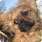 Adopt A Pet :: Super Taz!