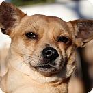 Adopt A Pet :: Laura