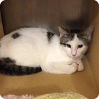 Adopt A Pet :: Basil - Colmar, PA