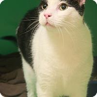 Adopt A Pet :: Stuart - Montclair, NJ