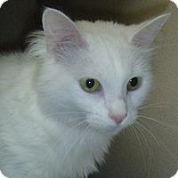 Adopt A Pet :: Oakley - Hamburg, NY