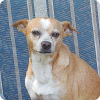 Adopt A Pet :: Carmen - Ormond Beach, FL