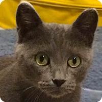 Adopt A Pet :: Desi - Calgary, AB