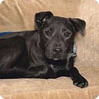 Adopt A Pet :: Adonis - Sudbury, MA