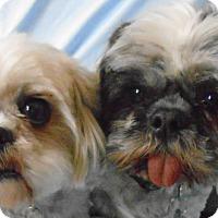 Adopt A Pet :: Daisy and Dawson - Chesterfield, MO