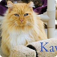 Adopt A Pet :: Kavi - Hamilton, MT