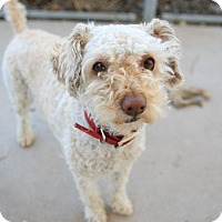 Adopt A Pet :: Rosey - Chula Vista, CA