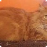 Adopt A Pet :: Red Rocket -  purebred - Ennis, TX