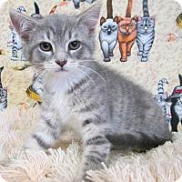 Adopt A Pet :: HARLEN - New Cumberland, WV