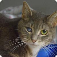 Adopt A Pet :: Princess - Pottsville, PA