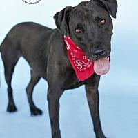 Adopt A Pet :: Coalton - Castaic, CA