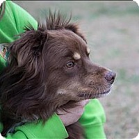 Adopt A Pet :: Finn (niko) - Neosho, MO
