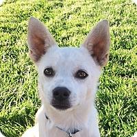 Adopt A Pet :: Yuki - Sunnyvale, CA