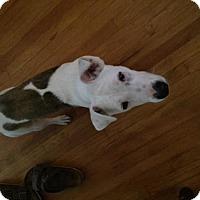 Terrier (Unknown Type, Medium) Mix Dog for adoption in Dana Point, California - Hazel