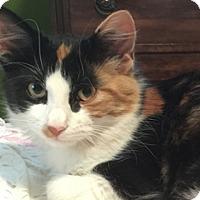 Adopt A Pet :: Mercedes - Great Falls, MT