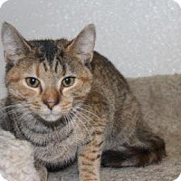 Adopt A Pet :: Shanika - Greensboro, NC