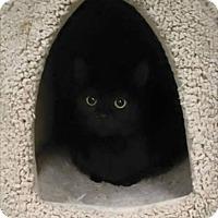 Adopt A Pet :: Jasmine - East McKeesport, PA