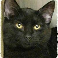 Adopt A Pet :: Toby - Pueblo West, CO
