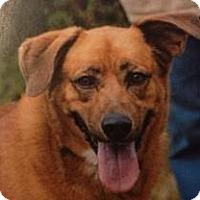 Adopt A Pet :: HICKORY - Gloucester, VA