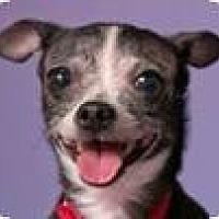 Adopt A Pet :: Sue - Chicago, IL