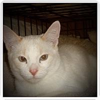 Adopt A Pet :: RENZO - Medford, WI