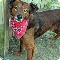 Adopt A Pet :: Eddy - Kimberton, PA