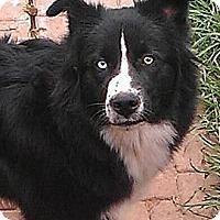 Adopt A Pet :: Luna - Alamosa, CO