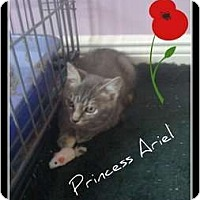 Adopt A Pet :: Princess Aurora - Mobile, AL
