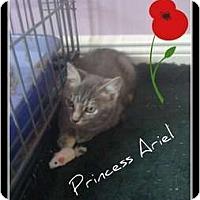 Adopt A Pet :: Princess Aurora - Mobile, AL