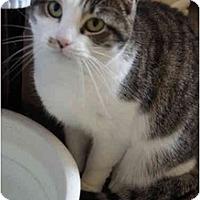 Adopt A Pet :: Tabitha - Xenia, OH