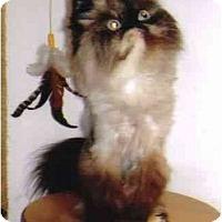 Adopt A Pet :: Trudy - Davis, CA