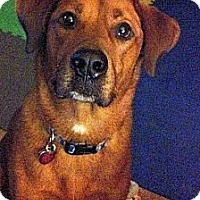 Adopt A Pet :: Copper - Elyria, OH