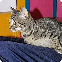 Adopt A Pet :: Ailey - Mobile, AL