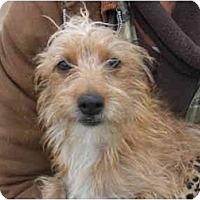 Adopt A Pet :: Rowdy - Kingsburg, CA