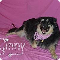 Adopt A Pet :: Ginny - Aurora, CO