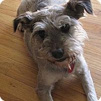 Adopt A Pet :: Toshi - Nine Mile Falls, WA
