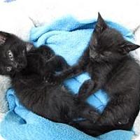 Adopt A Pet :: Sebastian - Island Park, NY