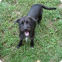 Adopt A Pet :: Matilda - Russellville, KY